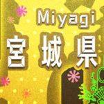 【情報募集】宮城県 仙台市 泉区のお正月情報